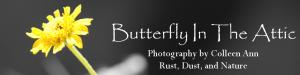 Butterfly In The Attic Photography